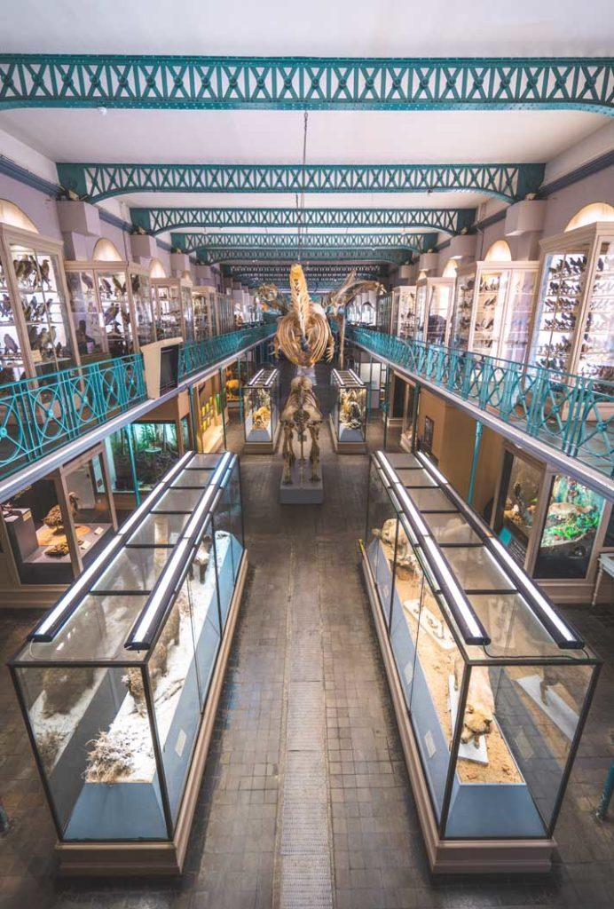musée d'histoire naturelle de Lille rénovation